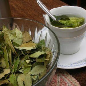 coca leaves tea