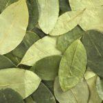 hojas de coca